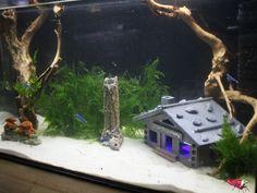 Unser Futterladen - Höhle Deko - LED Aquarium Licht