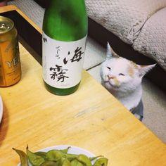 maruruna 20 hours ago すんすん、すんすん. 帰省中、猫村さん顔のマルちゃんでした♡ .
