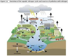 essay on water pollution Water pollution — overview — European Environment Agency Earth And Space Science, Earth From Space, Science Nature, Ap Environmental Science, Environmental Degradation, Nitrogen Cycle, All About Water, Sustainable Energy, Geography