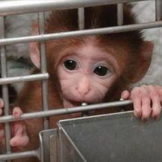 """""""98.6 aller beantragten Tierversuche passieren das Prozedere, obwohl sie im gravierendem Konflikt mit dem Tierschutzgesetz stehen."""""""