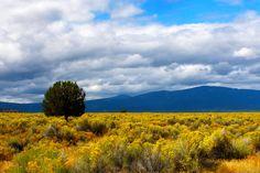 Field of Gold by Thundercatt99.deviantart.com on @deviantART