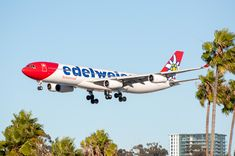 Edelweiss Air 18 from ZRH between he palm trees moments before touching down on runway 27 at SAN. San Jose Airport, Kids Running, Commercial Aircraft, Switzerland, Planes, Aviation, October, Pictures, City