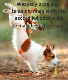 Save Life, Peace And Love, Animals And Pets, Dog Cat, Corgi, Positivity, Facts, Memes, Quotes