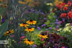 Photograph Garden flowers! by Patrice Thomas on 500px