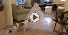 At first, this guy doesn't know what to think about his Christmas gift of 210 water bottles. It's large, it doesn't smell like anything, and doesn't look too exciting. At first he's a bit started, but then my oh my …