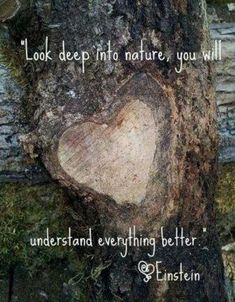 60 Beautiful Mother Nature Quotes And Sayings