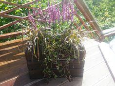 Låda med rosa stäppsalvia och prydnadsgräs