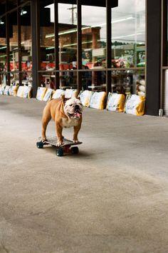 perrito en patineta.