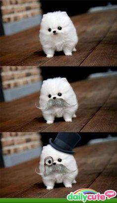 Mustache!!! ;)