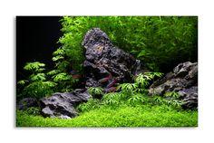 """'Blue Sky' Iwagumi  Một hồ khác của tác giả Mark Evans, diễn đàn ukaps.org. Sự kết hợp khéo léo giữa cây và đá đã tạo nên hình ảnh những """"cây cọ"""" dưới chân """"núi"""", gợi nhớ đến phong cảnh Á đông.  Kích thước: 60 x 30 x 36"""