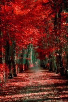 ~~The red forest by Pedro~~