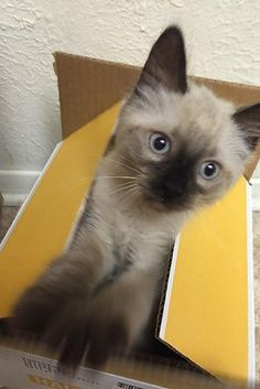 THIS VERY IMPORTANT SURPRISE KITTEN. | 23 Cat Pictures That Will Make You Almost Too Happy