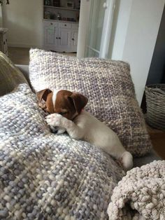jack russell ~ TURN OFF THE LIGHT PLEASE HUMAN. CAN'T SLEEP :D <3 <3 <3 <3