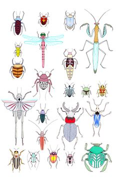 Bug print by Lydia Shirreff  via LEIFSHOP.COM