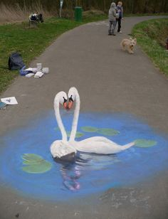 50 More Breathtaking 3d Street Art (paintings)  Swans Artist Edgar Muellar