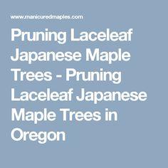Pruning Laceleaf Japanese Maple Trees - Pruning Laceleaf Japanese Maple Trees in Oregon