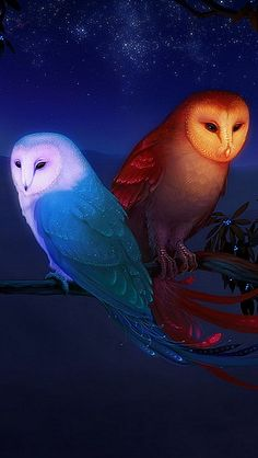 owl_night_birds_branch_73233_640x1136