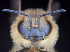 Scientists have delved deeper into the mystery of dying bees, and discovered that the cause of the problem is more pervasive than thought.