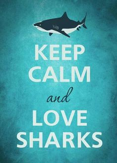 Keep calm and go sharks                                                                                                                                                     More