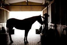 Jeffrey Wilms Training and Management Inc. has a comprehensive equestrian center in Fort McDowell, AZ. Trust us for training, breeding, and coaching. Equestrian, Amy, Youth, Management, Training, Horses, Horseback Riding, Work Outs, Excercise