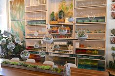 Visit Pigment, San Diego's Chic Succulent Boutique | Debra Lee Baldwin