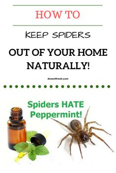 "I hate, hate, HATE spiders. If I see one scurrying around my home it puts me on edge for days – or until it's found and ""disposed"" of.    Luckily essential oils come to the rescue again"