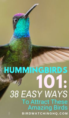 Attracting hummingbirds See more hummingbirds in your backyard and garden this summer. Tips include everything from nectar feeders to native plants. Funny Birds, Cute Birds, Pretty Birds, Beautiful Birds, How To Attract Hummingbirds, How To Attract Birds, Attracting Hummingbirds, Hummingbird Nectar, Hummingbird Plants