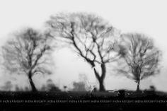 Long Island Photographer, Indira Klotzer Photography
