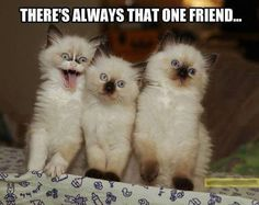 There is always one in every group!!