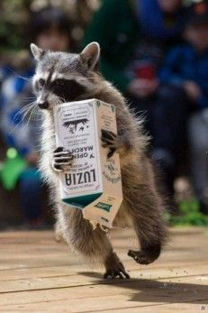عجائب و غرائب حول العالم Animals Cute Funny Animals Funny Animal Pictures