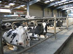 Farming News - Leading vet discusses management of cubicle beds ...