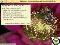 ▶ Habitat for Pollinators and Beneficial Insects - YouTube
