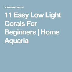 11 Easy Low Light Corals For Beginners | Home Aquaria