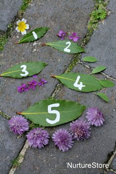 Take math outdoors! Leaf math game ideas