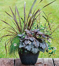 A. Fiber optic grass (Scirpus cernuus) — 1  B. Coralbells (Heuchera 'Amethyst Mist') — 1  C. New Zealand flax (Phormium tenax) — 1  D. Variegated geranium (Pelargonium 'Happy Thought') — 1  E. Calamondin (Citrofortunella microcarpa) — 1