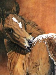 Horse painting. That's The Spot. Cute little Appaloosa foal nibbling just on his back. Pretty little blanket of spots on his rump and a small white blaze. Just pure cuteness! Please also visit www.JustForYouPropheticArt.com for more colorful art you might like to pin. Thanks for looking!