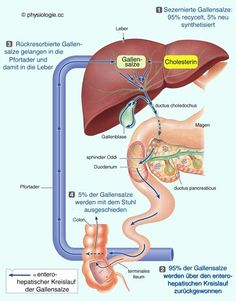 Physiology liver circulation function - All About Health Examen Clinique, Medicine Notes, Rn School, Bile Duct, Medical Anatomy, Human Anatomy And Physiology, Body Systems, Biochemistry, Nursing Students