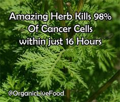 Research shows that Chinese herb 'Sweet Wormwood' and Iron can Kill 98% of cancer cells within 16 hours and how pharmaceutical drugs are nutritionally ruined and patented for the sake of corporate profit