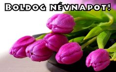New wallpaper iphone purple flowers macros ideas Purple Tulips, White Tulips, Tulips Flowers, Fresh Flowers, Planting Flowers, Beautiful Flowers, Purple Rain, Tulips Images, Flower Images
