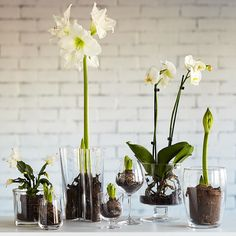 Use glass cylinders and vases for bulb flowers.