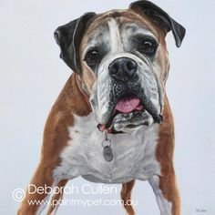 DOG PORTRAIT Boss Boxer Acrylic on Canvas x x Private Commission Daryl (Mt Pleasant WA) Boss was commissioned for a birthday present. Such a gorgeous boy. He is very much cherished and deservedly spoiled with a cheeky Boxers, 70th Birthday Presents, Boxer Mom, Dog Portraits, All Dogs, My Animal, Cute Puppies, Fur Babies, Pets