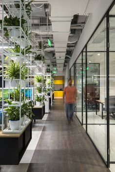 Interior office plants Popular Tour Of Club Med Offices Shanghai Office Plants Modern Office Decor Tropical Plant Rentals 47 Best Office Plants And Green Walls Images Office Plants