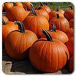 Organic Jack Straw Pumpkin.