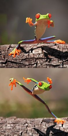Ninja frog @ KateAnderson...for some reason this made me think of you.