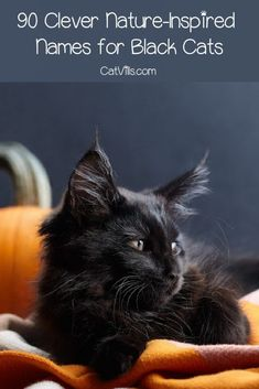 Finding nature names for black cats is not always easy, but we've got you covered! Check out 90 amazing ideas that you'll love! Nature Inspired Names, Nature Names, Names For Black Cats, Cat Names, Types Of Crocodiles, Dark Purple Flowers, Gender Neutral Names, Reef Shark, Most Beautiful Birds