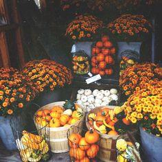 i love orange and yellow flowers. it feels like fall