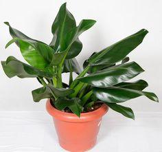Cinco plantas (para ambientes fechados) que limpam o ar da casa - Casa
