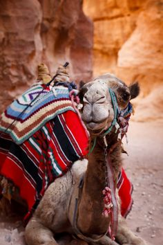 Jordan | camels | #travelexplore #discover Oh the trips you can have when you come to Jordan. Book a lovely place at one of our great Holliday Accommodations across Jordan at www.gweet.com