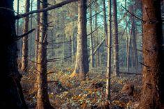 Photograph Dark Forest by Dwane Doran on 500px