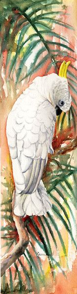 Sulfur Crested Cockatoo I - Christine Reichow Watercolor Artist - (239) 273-9568